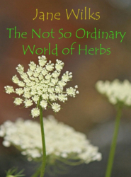 The Not So Ordinary World of Herbs